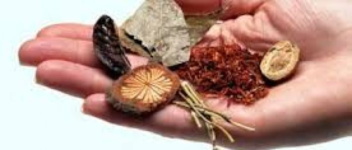hand_and_herbs